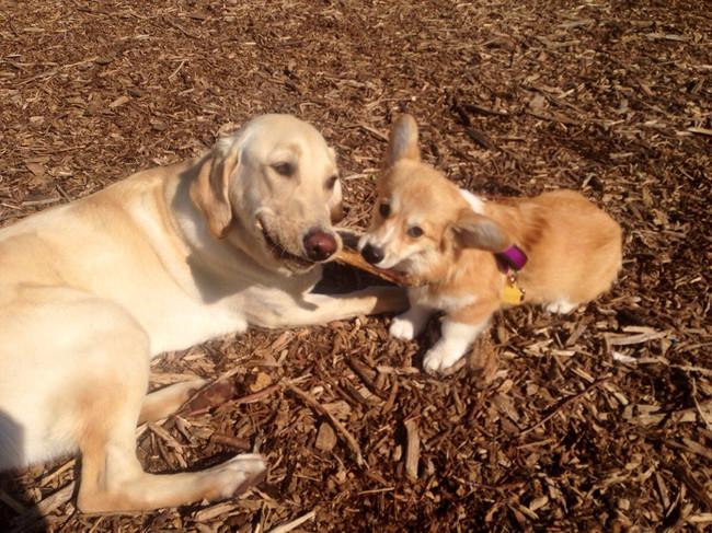 23張「大狗狗和小狗狗」的超恩愛照片,看完會讓你身心滿足到明天。