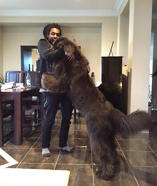21隻「可以一口把你吃掉但選擇愛你」的巨型狗狗 越大隻愛越多啊!