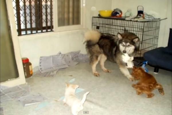 這隻從鬼門關前被救回的受虐狗狗等不到人收養,距離安樂死30分鐘前一輛輪椅出現在他面前。