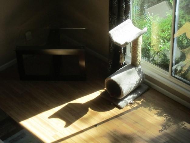 19張照片讓你看到影子想要跟我們說的事。