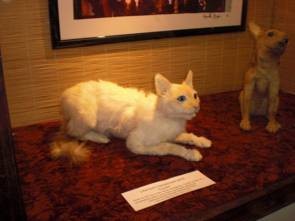 For whatever reason, the museum also houses Liberace's stuffed cat.