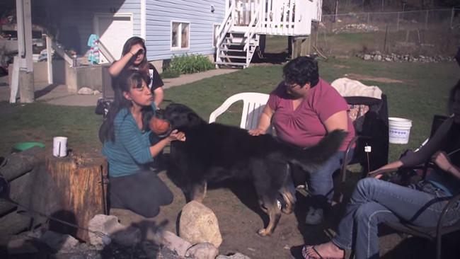 男孩和狗狗因為車禍而跌落山谷裡,沒想到狗狗為了護主不惜和野狼大戰3天!