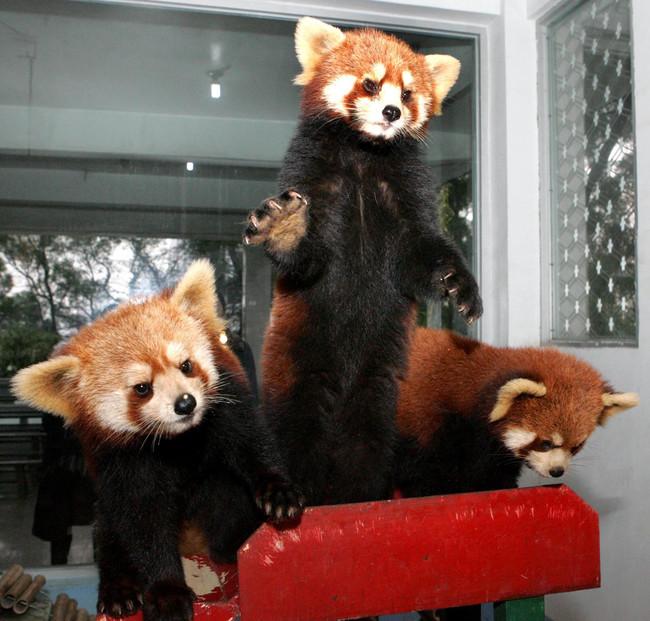 22隻越生氣就越可愛的小動物。
