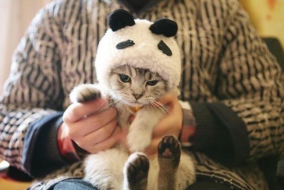 """...I am NOT a panda."""