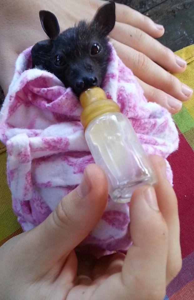 看可愛貓咪照片已經不稀奇了,要看過這27種動物小Baby的樣子才能充飽一天所需的電力啊!