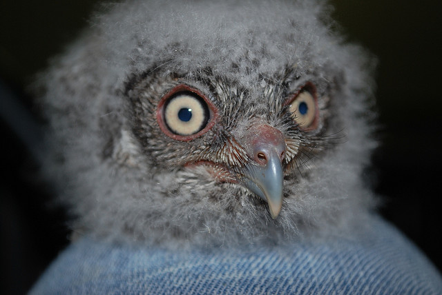 I kid you not...this is a real baby owl. It is made of fluff, pure imagination, and wonder...I'm pretty sure. Also magic probably.