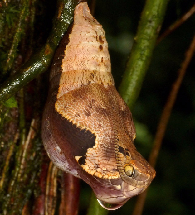我就直接告訴你「這不是蛇」吧,但背後的真相好像比蛇還要恐怖...