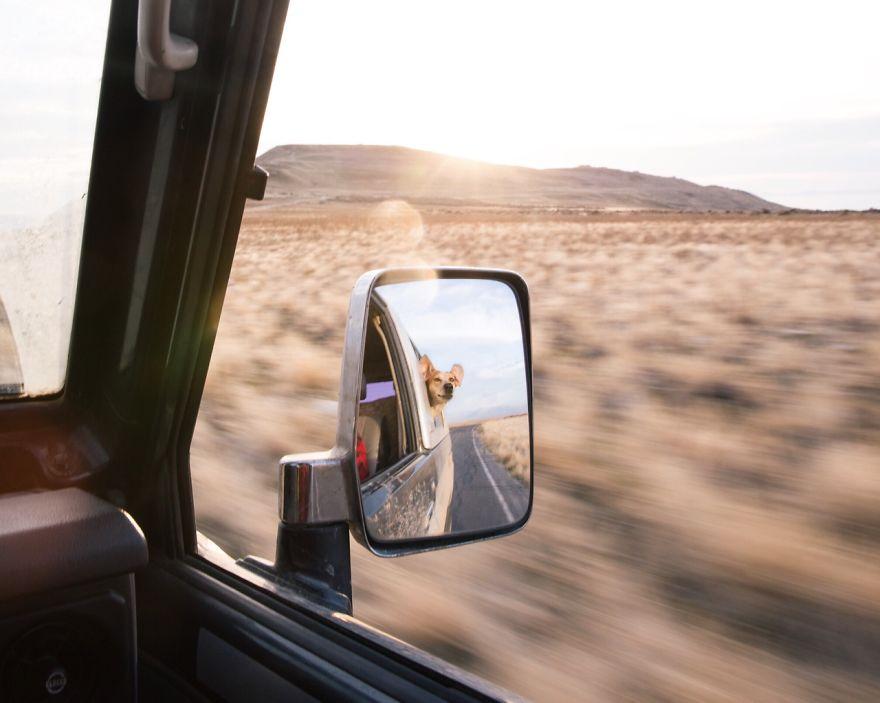 dog-traveling-car-motorcycle-maddie-on-road-18
