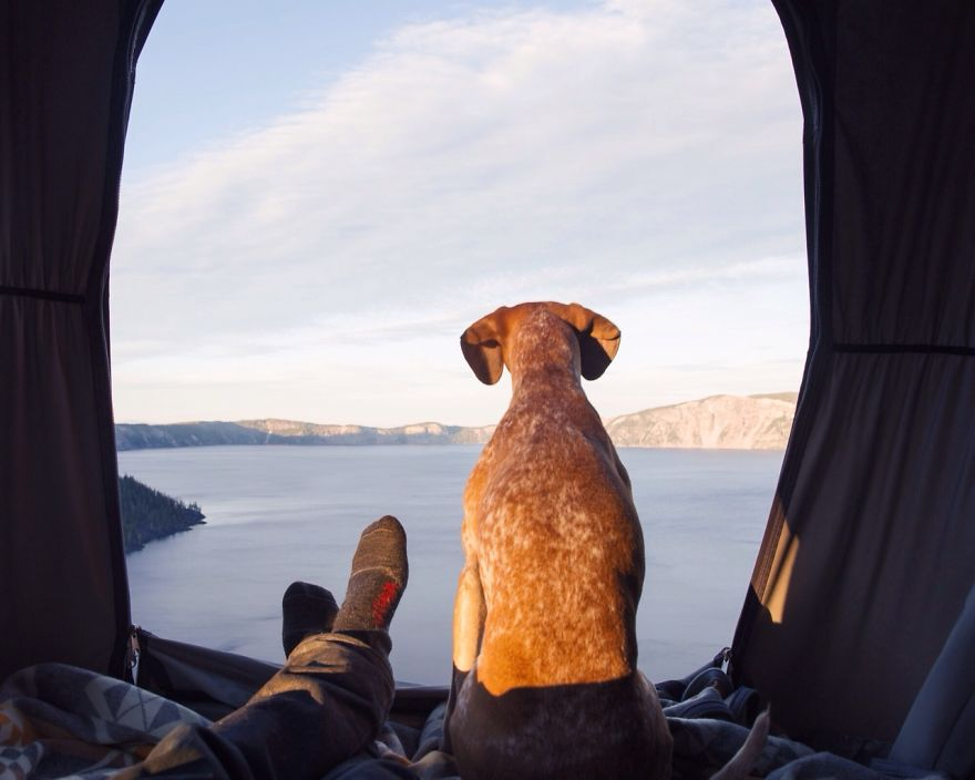 dog-traveling-car-motorcycle-maddie-on-road-20
