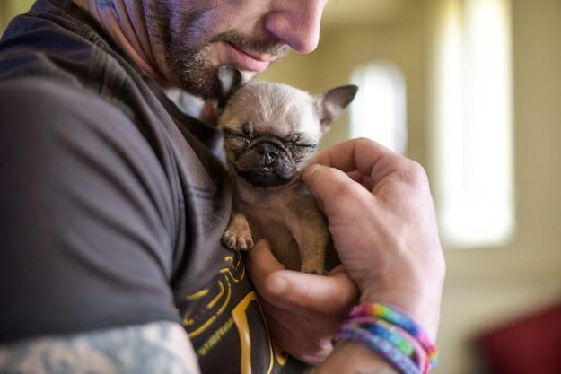 別再躲了!就算逃到天涯海角這隻全英國最小的狗狗還是會把你的心完全攻陷!