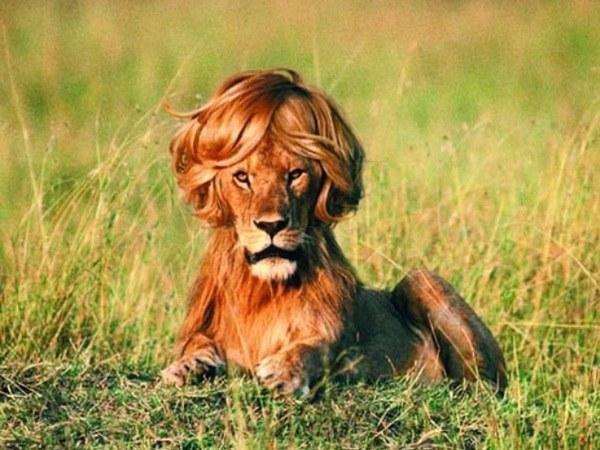 """Gay lion"""