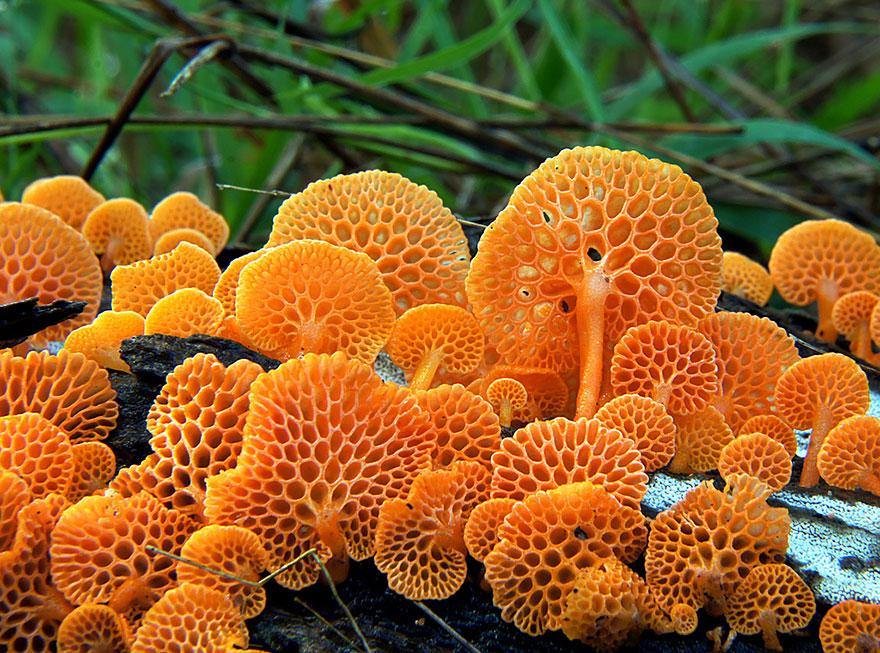 33種地球上最奧妙的菌類,會讓你彷彿進入到神祕異世界!