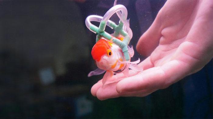 goldfish-wheelchair-cork-sling-float-2