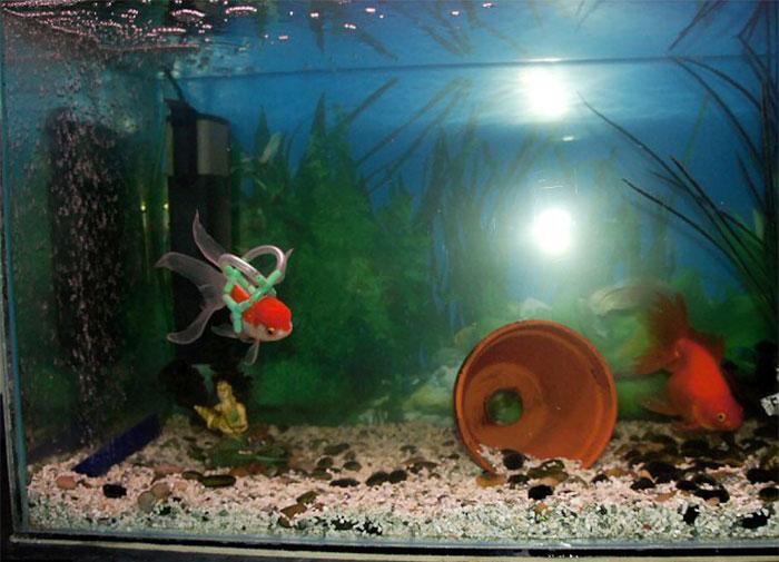 goldfish-wheelchair-cork-sling-float-3