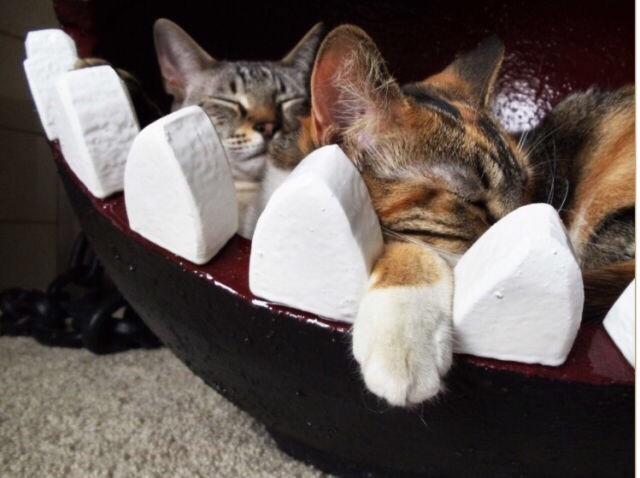 有人在網上發現到一個瑪莉歐汪汪狗造型的超可愛貓咪窩,秒賣掉後還造成了熱烈的討論。