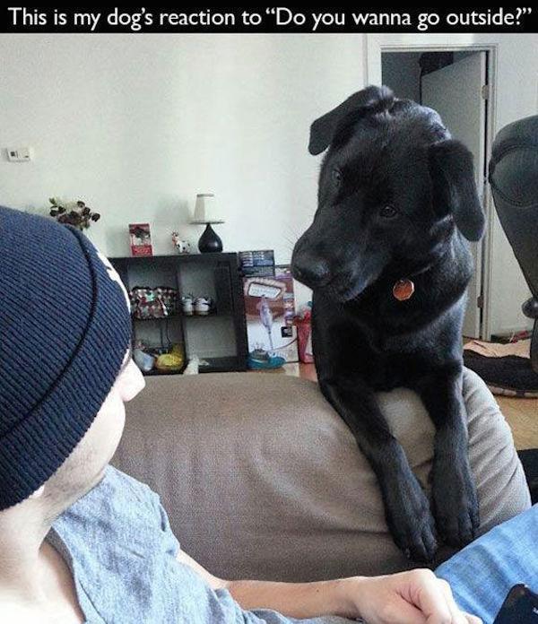 29張每個狗主人都能秒體會的爆笑照片。#29充滿一卡車的洋蔥...