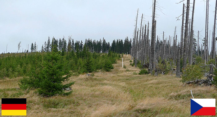 Germany And Czech Republic Showcase Two Different Approaches To Bark Beetle Infestation - Silvicultural Intervention Vs. Intentional Neglect