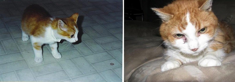 21張寵物第一天與最後一天的對照圖,讓我看完不小心用完一整包衛生紙了!