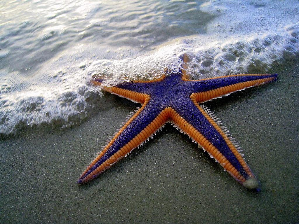 Starfish have no brains.