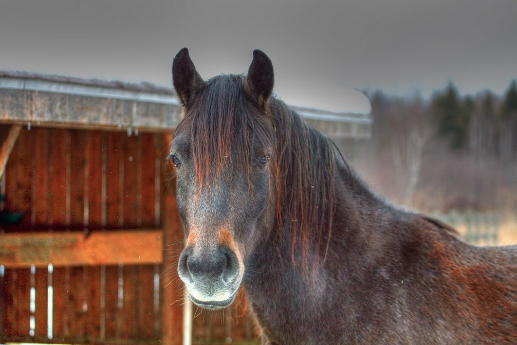 Horses have the largest eyes of any land mammal.