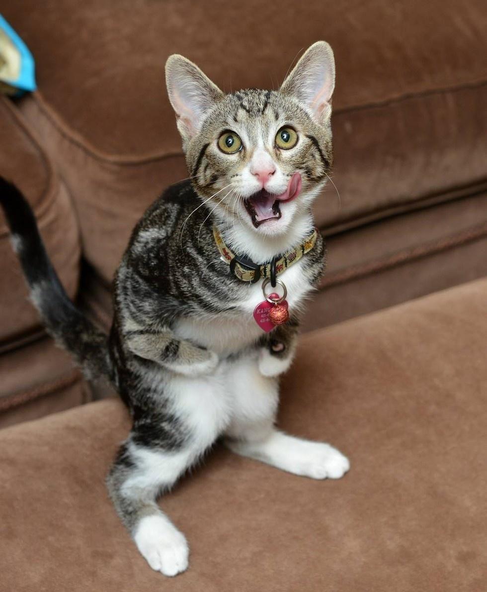 她的主人一直提醒她不是一隻袋鼠,但她怎麼樣就是不聽!