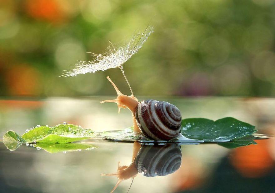 Dandelion Seed Umbrella