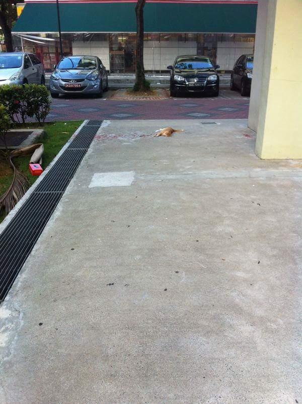 這名網友在街上看到一隻流血不止的貓,但當他走進時,卻發現一個讓他感覺被耍的爆笑真相。