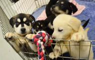 英國這間大學為了要紓緩學生的壓力,設置了這間紓壓到不行的「小狗狗室」!