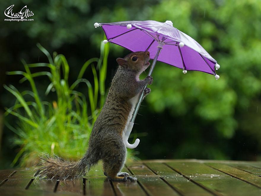 這名攝影師給了這隻淋雨的小松鼠一把小雨傘,結果這些驚奇的畫面就發生了!