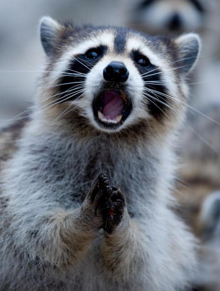 這20隻動物最萌的不是他們的外表,而是他們被嚇到後的萌樣!