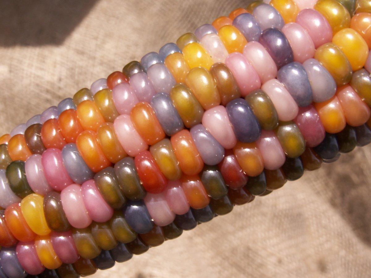 一般玉米已經不稀奇了,拿出「寶石玉米」出來啃才夠厲害!