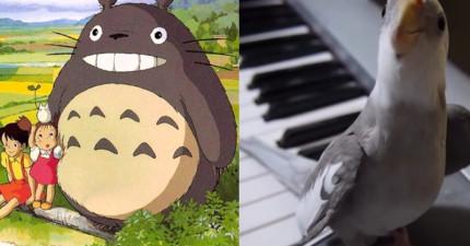這隻鳥竟在跟著鋼琴配樂唱《龍貓》的主題曲?!而且唱得比人類還好...完全打動了我!