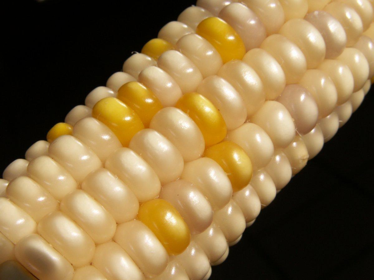 Unlike sweet corn, Glass Gem corn isn't generally eaten off the cob.