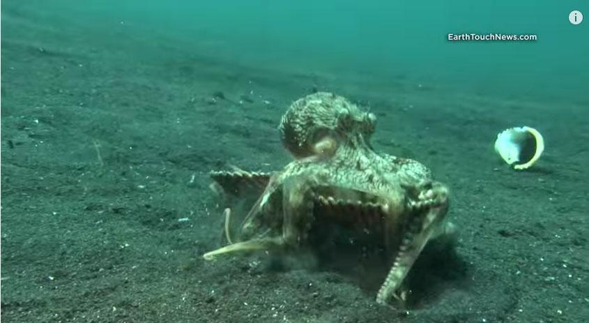 這不是一個超大型的蛤蜊 看看他「轉變前的模樣」你才會知道什麼叫有趣!
