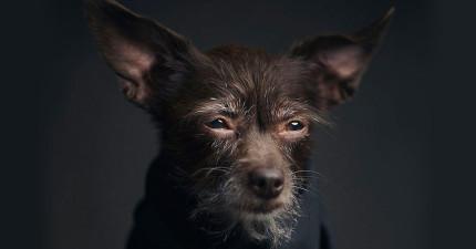 攝影師把動物的情緒都拍出來,就是為了要讓我們人類知道一件我們必須要重視的事情。