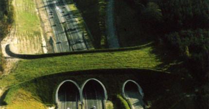 9座不是為了人類而蓋的橋會讓你感動到搖身邊的朋友!