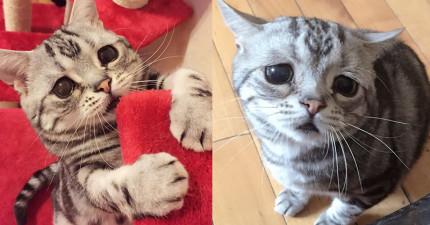 請你現在就放下手邊工作,來抱抱這隻全世界看起來最可憐的爆萌小貓!