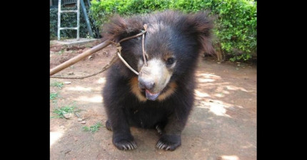 看著這隻小熊可憐的哀怨眼神,他曾經遭受的殘忍對待會讓你想衝去誓死捍衛他!