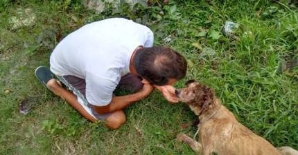 這隻狗狗被人打到頭破血流,但經過善心拯救後...你不會相信他原本的模樣有多可愛!