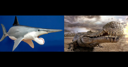 16隻好險現在已經絕種的地獄可怕生物,把暴龍當點心吃的#4真的太驚悚了...