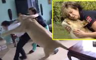 這戶人家將獅子當寵物從小養大,結果某天她居然發了狂把主人的朋友當做美味大餐!(內有影片)