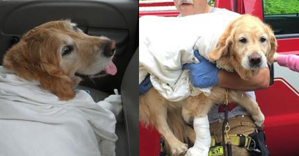 這隻導盲犬上前給迎面駛來的公車撞上,就是為了保護主人。