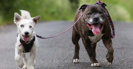 收容所堅決讓這兩隻狗朋友同時被領養,原因會讓你感動到想要擁抱他們倆!