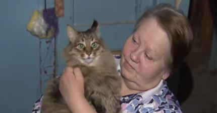 如果不是這隻流浪貓咪的話,這個在冰天雪地裡紙箱中的小寶寶早就死了!