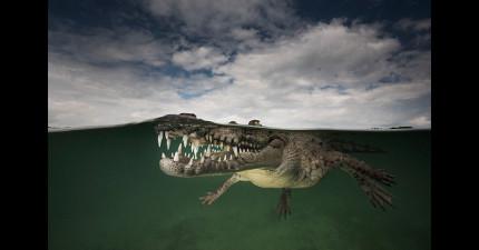 17張「水面上」和「水面下」的世界完美結合的照片,讓你認識一個更夢幻的世界!