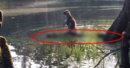 這隻浣熊做出了連迪士尼都無法解釋的事情,全都被拍下來了!