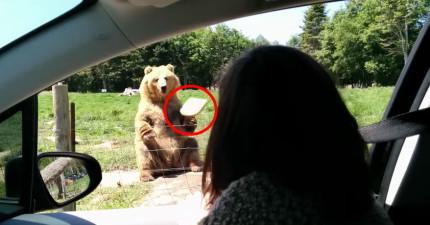 這頭熊除了會跟你打招呼之外,在影片最後看到的才真的讓我超佩服!