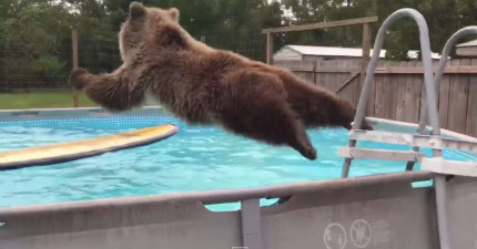 這隻胖熊超興奮消暑的方法就是你我現在最需要的「炎夏解藥」!