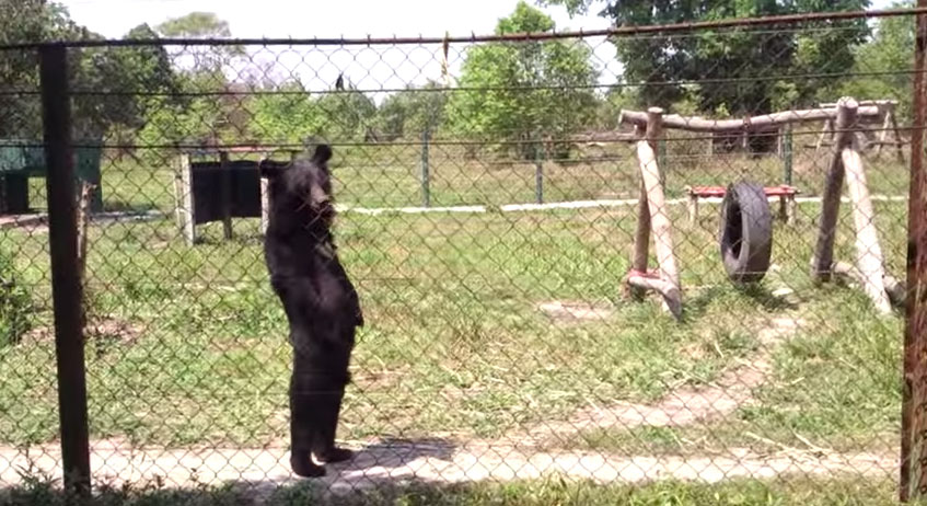 這是一頭熊還是一個人類?!