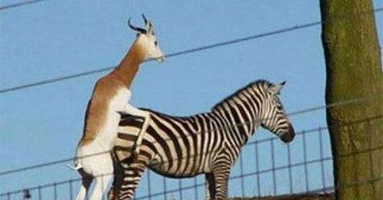 9隻還搞不清楚怎麼愛愛的動物。來人啊,誰開導開導他們啊!